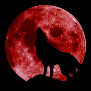 blood moon with wolf